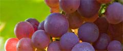 Awand Winning Wines
